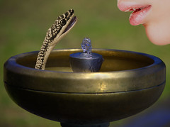 The Drinking Fountain (swong95765) Tags: woman art water fountain female mouth drink bokeh snake lips
