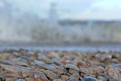 Am Meer (6) (Spinnerelschen) Tags: holland strand meer