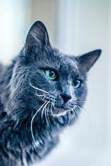 Another (Velvet Pines) Tags: cat kitten 50mm nikon