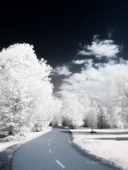 La Route qui Amne Ailleurs (Sous l'Oeil de Sylvie) Tags: sentier chemin arbres trees ir infrarouge infrared sousloeildesylvie canon g11modifi powershot mai may 2016 parcveilleux