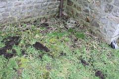 IMG_3086 (De Tuinen van Servaas en Dorothe) Tags: duiven mest dakgoot stof gebinte