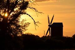Couch de soleil (jacousi45) Tags: summer sun france bird moulin vent soleil down oiseau ete loiret sologne couche