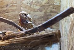 iguana (gregork.) Tags: spring maj 2013 pomlad mozirje mozirskigaj živali