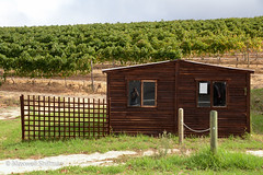 Shed in the vinyard at Groot Constantia