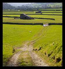 A path in the Dales (steverichard) Tags: uk england green grass rural river countryside spring track sheep path yorkshire barns sunny fields british walls footpath dales drystone swaledale muker steverichard