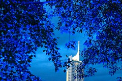 Vienna Skyscraper through Blue Tree (rolaaa) Tags: vienna wien blue trees light sky white plant tower leaves night contrast photography mood view spot distance 50mm18 canonphotography canon550d dps50mm