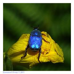 U3ZT9702 (☆♺☆) Tags: jaune vert bleu uzzz u3z hoplie