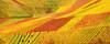 Autum Vineyard Panorama (Habub3) Tags: travel autumn red holiday plant green rot nature yellow germany landscape deutschland vineyard search reisen flora nikon europa europe wine urlaub herbst natur gelb grapes grün landschaft vacanze wein weinberg d300 beutelsbach rems serach 2013 remstal weinstadt habub3