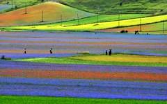 ben oltre le idee di GIUSTO e di SBAGLIATO c'  un CAMPO. ti ASPETTER laggi. [ Jalaluddin Rumi ] (carlini.sonia) Tags: italy italia gente natura persone fiori sonia colori umbria monti castelluccio campi sibillini coltivazione