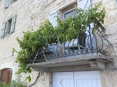 Castèlnòu de Montmiralh - 16 (Josep M. Martí) Tags: flickr balcony balkon tarn parra balcon vigne languedoc grapevine albi balcone llenguadoc castelnaudemontmiral linguadoca midipyrénées migdiapirineus balcón balcó lengadòc bescaume miègjornpirenèus llibresdefotos castèlnòudemontmiralh kletterrebe