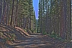 Dirt Road - Converse Basin - Sequoia National Forest - Fresno County - California - 04 May 2013 (goatlockerguns) Tags: california county usa mountains west forest nevada basin sierra national fresno converse western sequoia 2013