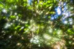 Sol e Folhas