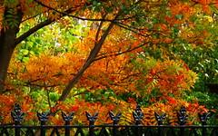 Oakshaw In the Autumn fence (dddoc1965) Tags: david scotland photographer cameron tours paisley oakshaw davidcameron dddoc positivepaisley