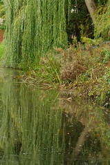 willow (Sandy.Sanderson ONE MILLION PLUS) Tags: bridge wild holiday cute water leaves wonderful canal leaf amazing perfect lock relaxing award class explore willow dreams refections digitalcameraclub
