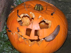 Seriously freaky (*Penne*Pillswigger*) Tags: halloween pumpkin scary creepy gross slugs soggy slimy mouldy vision:outdoor=0592 theveryessenceofhalloween