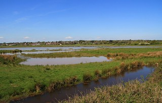 Pulborough Brooks RSPB West Sussex (13)