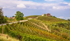 Grapeville (Franco Beccari) Tags: world trip travel blue vacation italy white holiday black color colour green tourism nature yellow landscape photography nikon europe day cloudy meadows vineyards grapes fields nikkor langhe d600 vision:mountain=0835 vision:outdoor=0986 vision:plant=0619 vision:sky=0722