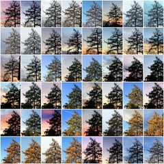 a year in the life (overthemoon) Tags: sky tree collage schweiz switzerland seasons suisse mosaic year changing svizzera larch 48 gettyimages vevey vaud onetree romandie mlze 2013 saintlgier