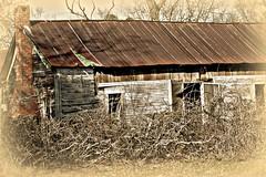 Nature wins (stilesathelake) Tags: old house nature worn