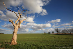 The White Tree (right2roam) Tags: england white tree field rural landscape dead spring unitedkingdom farm country norfolk agricultural eastanglia broads norfolkbroads thurne right2roam