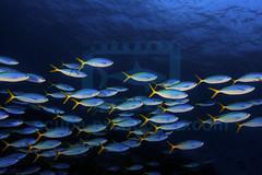 2012 08 BARATHIEU Réunion 4922