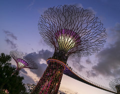 Colourful Evening @ Gardens by the Bay, GBTB, Singapore (gintks) Tags: evening singapore cloudy colourful singaporetourismboard supertrees