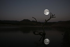 New Moon (Donald Palansky Photography) Tags: arizona moon lake reflection tree wet water night sony newmoon alpha lonetree fineartphotography a900 bartlettlake truthandillusion