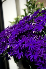 Purple splendour (IanAWood) Tags: london southbank primelens walkingwithmynikon nikkorafs28mmf18g nikondf