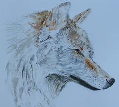 "Wolf <a style=""margin-left:10px; font-size:0.8em;"" href=""https://www.flickr.com/photos/66157425@N08/14124478174/"" target=""_blank"">@flickr</a>"