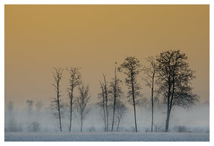 Frosty Fields (Philipp Schweighofer) Tags: morning trees winter sky orange snow bird field fog sunrise canon austria europe sitting top foggy frosty philipp styria 2015 100400 schweighofer 5diii