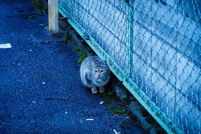 Today's Cat@2015-02-18