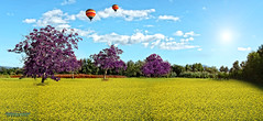 Mix of COLORS (Alessandro Di Cicco - Photography) Tags: wallpaper hot nature colors photography air natura giallo della ballons viola colori prato mongolfiere
