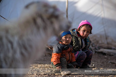 In the shadow of the goats. Young Changpa nomads grow up surrounded by Pashmina goats. (BehzadJL) Tags: portrait india photography tibet tibetan himalayas nomads ladakh changthang behzad phototour changpa indiaphototour behzadlarry behzadlarryphotography ladakhphototour