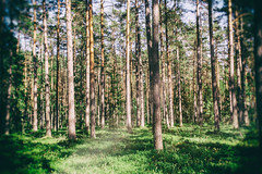 Estonian Forest (MacBeales) Tags: wood canon eos 350d tallinn estonia