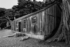 Whaler's Cabin Monochrome - Happy Wall Wednesday (randyherring) Tags: california park ca trees blackandwhite bw window monochrome point us cabin afternoon unitedstates outdoor historic historical recreation whaling pointlobos whaler carmelbythesea pointlobosstatenaturalreserve