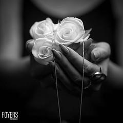 White roses (Bob Foyers) Tags: wordpress foyersphotography