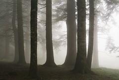 Do you feel it? (zampination) Tags: trees film misty fog forest 50mm moody pentax spooky vista 100 agfa expired mx f17 pentaxa