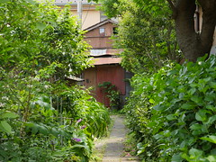 The Path Ahead (CentipedeCarpet) Tags: green japan four photos kamakura panasonic micro  enoshima unlimited  thirds  urbex gx8 1235mmf28