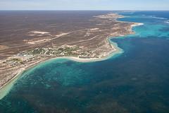 WA Coral Bay - 3081