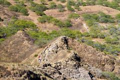IMG_4123 (The.Rohit) Tags: travel vacation mountain beach nature landscape hawaii coast waikiki oahu hiking hill hike explore crater vista honolulu aloha leahi hikingtrail diamondheadcrater diamondheadstatemonument diamondheadsummittrail