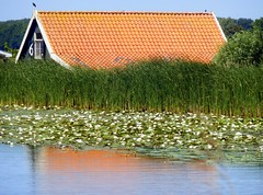 Abcoude01 (Quetzalcoatl002) Tags: roof house reflection reed water rural countryside village picturesque waterlillies waterside abcoude