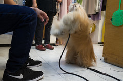 tailor-cleaner (Charley Lhasa) Tags: nyc newyorkcity dog ny newyork shop pattern manhattan treats cleaners noflash tricks upperwestside highfive uncropped charley kims uws drycleaners lightroom lhasaapso 3stars aperturepriority dng flagged grii highfives adobelightroom iso560 1ev charleylhasa 183mm ricohgrii secatf28 kimscleaners 28mm35mmequivalent tumblr160614 httpstmblrcozpjiby27wmqf7 r007552 taken160614165437 uploaded160614182458 adobelightroomcc20156 lightroomcc20156