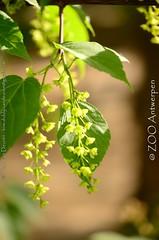tree flowers (MrTDiddy) Tags: flowers plant tree zoo boom antwerp antwerpen bloemen zooantwerpen
