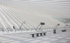 Lige Guillemins (Rolandito.) Tags: santiago station belgium belgique belgie gare calatrava luik lige belgien lttich guillemins nahnhof