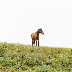 Waipi'o On Horseback | Big Island, Hawaii (jamilabbasy) Tags: horse hawaii riding hi bigisland horseback waipio waipiovalley