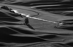 Dust and Dusk (llabe) Tags: tree rollinghills hills wheatfields farmland car dirtroad dust steptoebutte palouse easternwashington washington blackandwhite monotone nikon d750