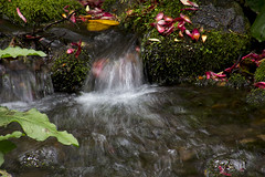 2016-06-21 Flowing along! (Mary Wardell) Tags: water oregon canon garden portland flow moss stream crystal springs rhododendron 60d