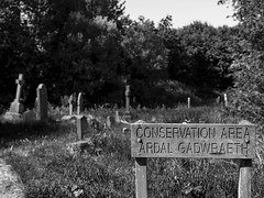 Conservation Area!! (All I want for Christmas is a Leica) Tags: monochrome cemetery graveyard woodland blackwhite bokeh graves conservationarea cathayscemetery monochromelandscape panasoniclumixg3 panasoniclumix25mmf14