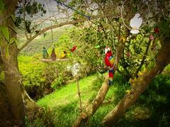 Trpico (Bonsailara1) Tags: wood mountains birds forest garden venezuela craft parrot souvenir buenavista lara
