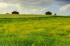 Boyabat (Senol Demir) Tags: boyabat sinop field flora landscape ngc concordians turkey trkiye wooden house